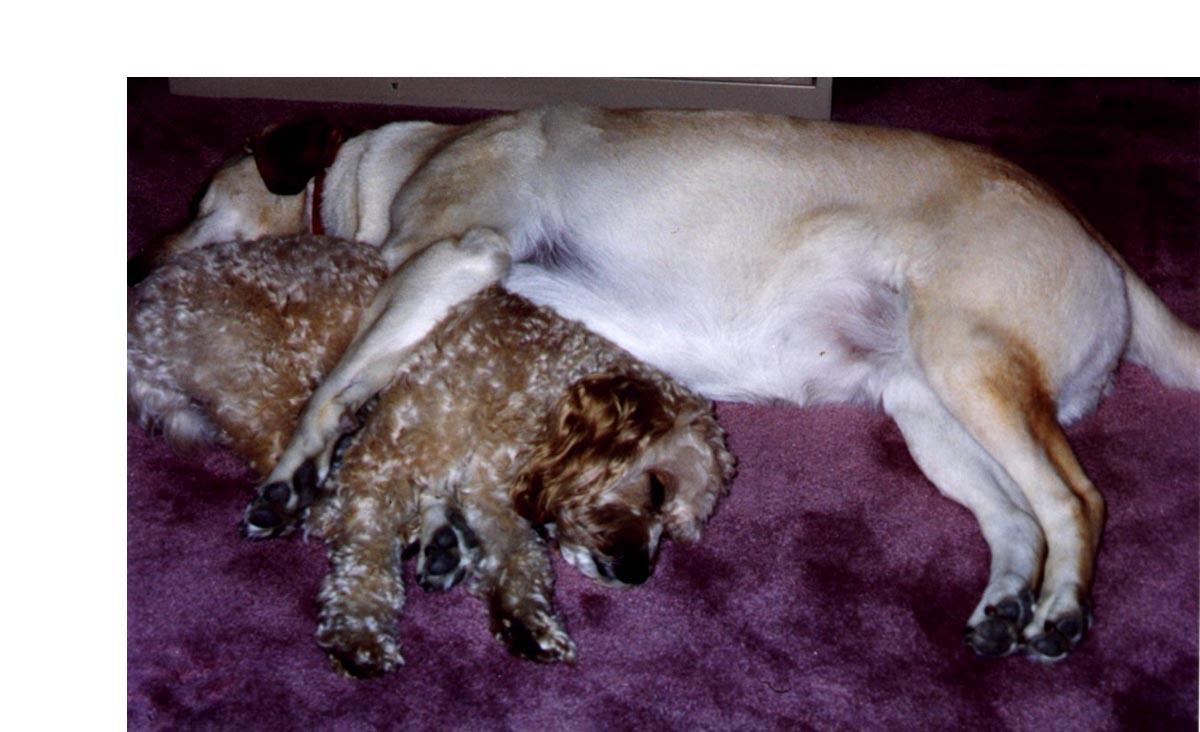 Sam & Abby Cuddling