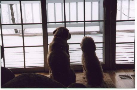Sam & Abby Photo Here